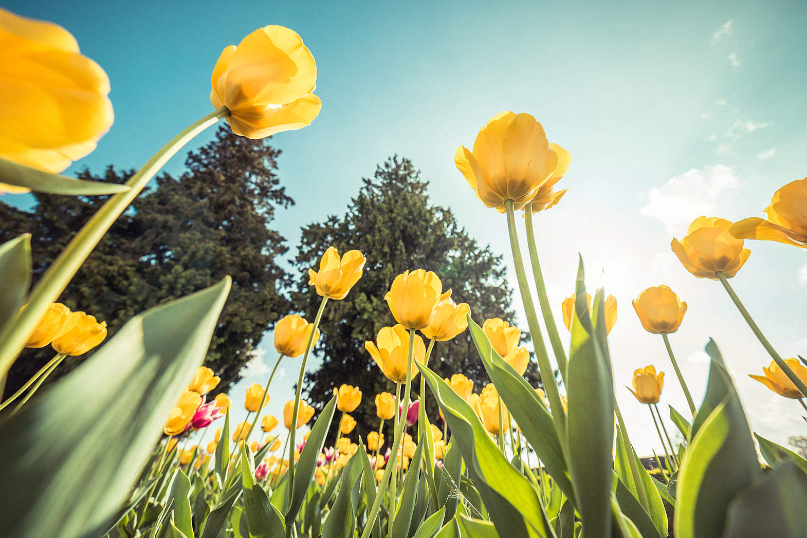 Sunny Spring Day Ahead!