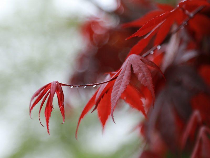 Rain Break and a Chill