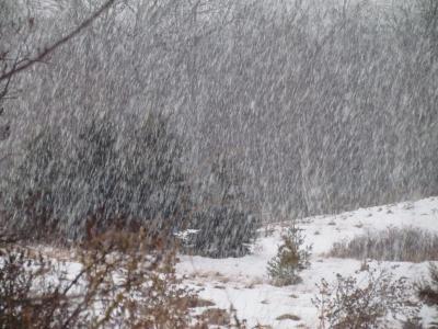Accumulating snowfall today