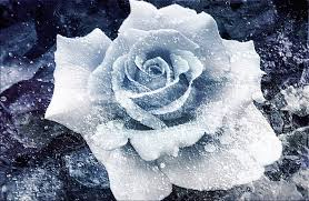 Winter Showers Bring No Flowers